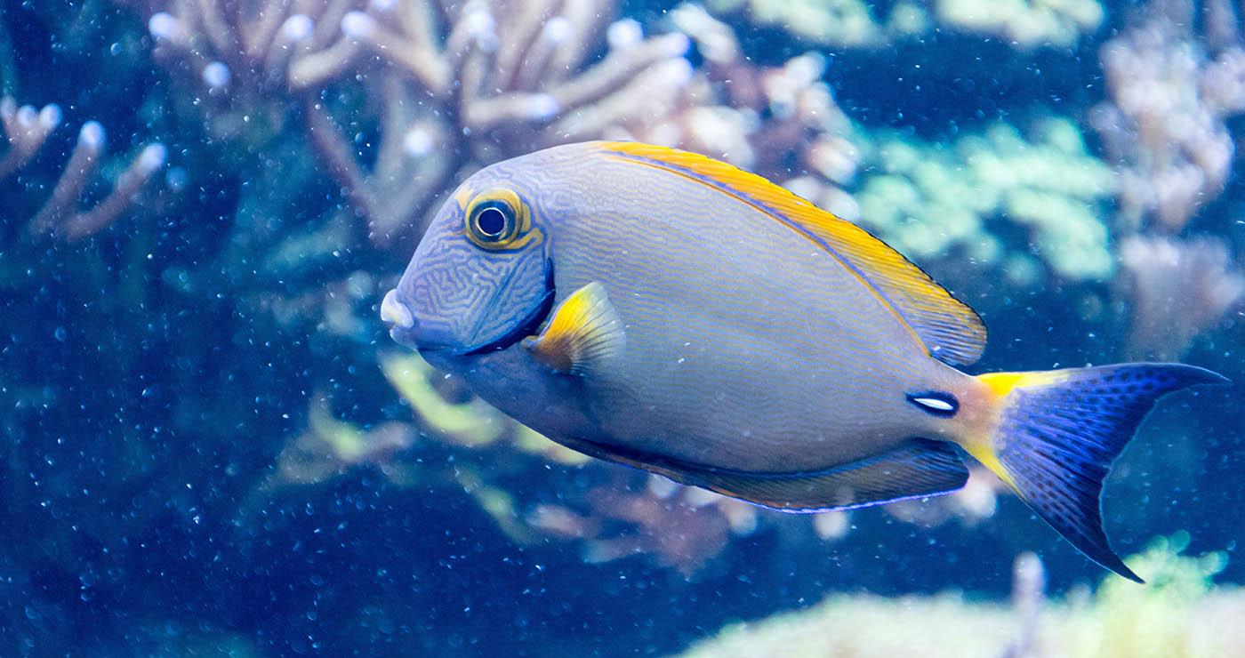 Oceanarium wNiechorzu