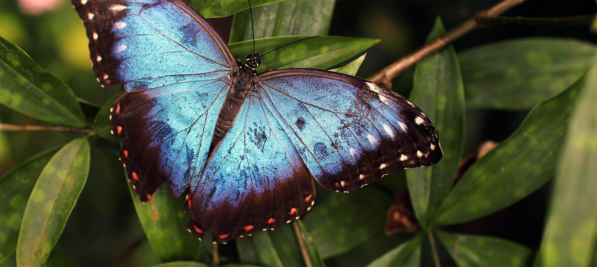 Motylarnia Niechorze – niesamowite okazy
