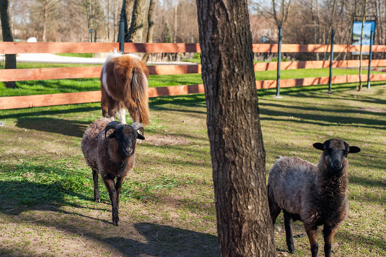 Baltic Natur Park dla dzieci -mini Zoo